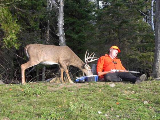 funny-deer-picture-sleeping-hunter-outdoors-smart-animal-stealing-food