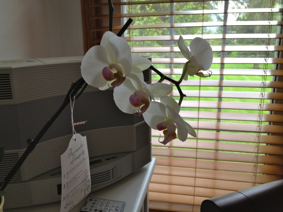 orchid by the window
