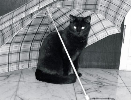 1280px-Cat_under_an_umbrella