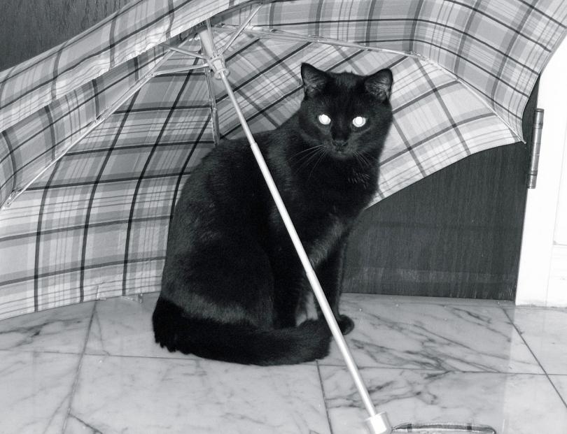 1280px-Cat_under_an_umbrella