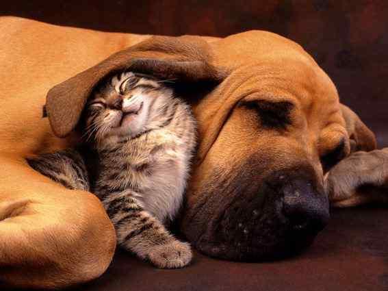 sleep pals